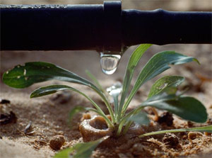 our Plantation Fl drip irrigation team installs professional systems